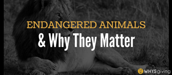 Endangered Animals and Why They Matter