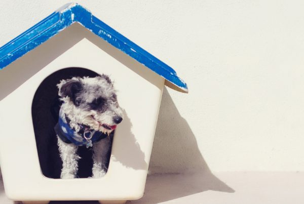 Adopt a Shelter Dog Month | WHYSgiving
